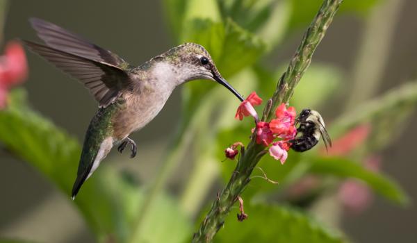 Bird and bee on flower